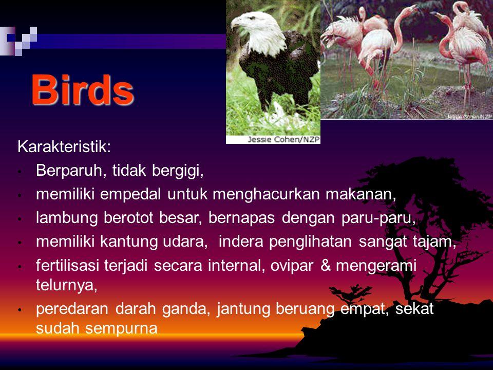 Birds Karakteristik: Berparuh, tidak bergigi,