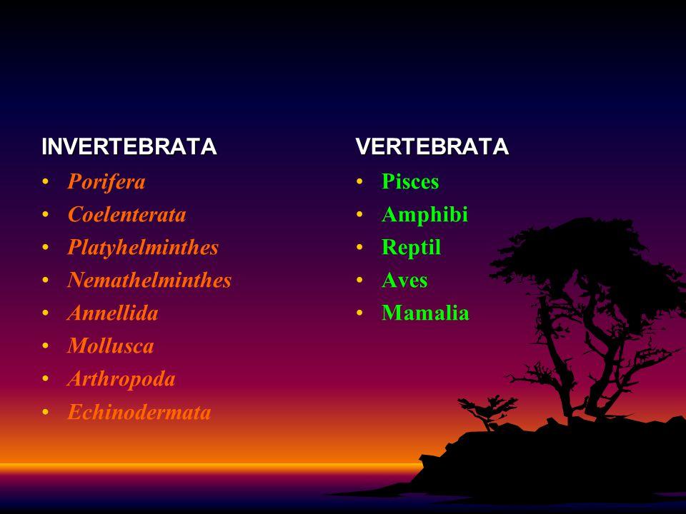 INVERTEBRATA VERTEBRATA. Porifera. Coelenterata. Platyhelminthes. Nemathelminthes. Annellida. Mollusca.
