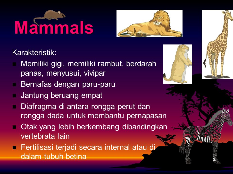 Mammals Karakteristik: