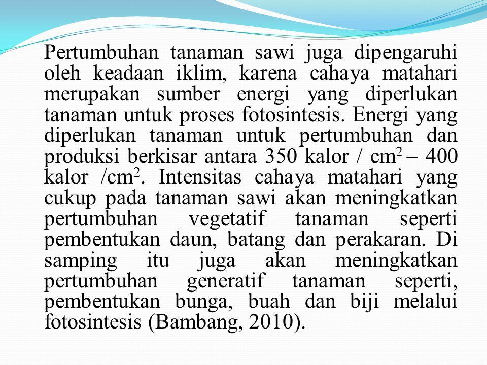 Pertumbuhan tanaman sawi juga dipengaruhi oleh keadaan iklim, karena cahaya matahari merupakan sumber energi yang diperlukan tanaman untuk proses fotosintesis.