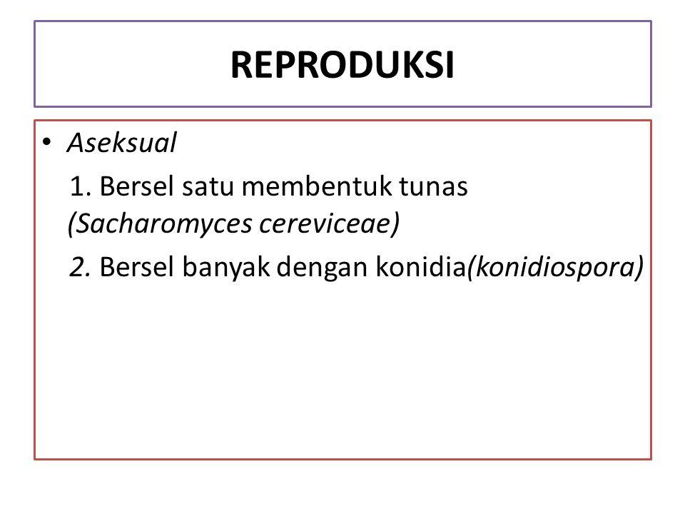 REPRODUKSI Aseksual. 1. Bersel satu membentuk tunas (Sacharomyces cereviceae) 2.