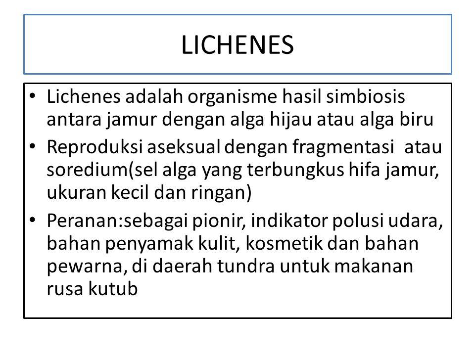 LICHENES Lichenes adalah organisme hasil simbiosis antara jamur dengan alga hijau atau alga biru.