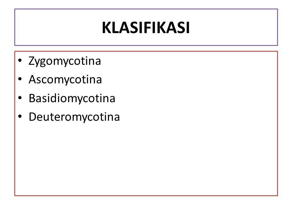 KLASIFIKASI Zygomycotina Ascomycotina Basidiomycotina Deuteromycotina