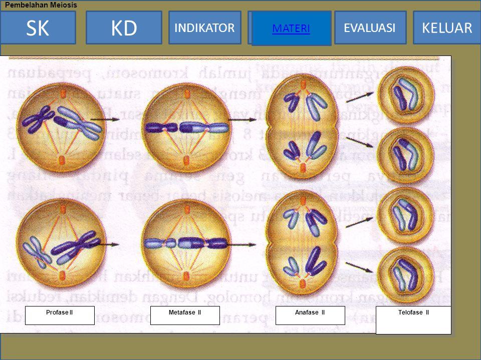 MATERI Pembelahan Meiosis Profase II Metafase II Anafase II