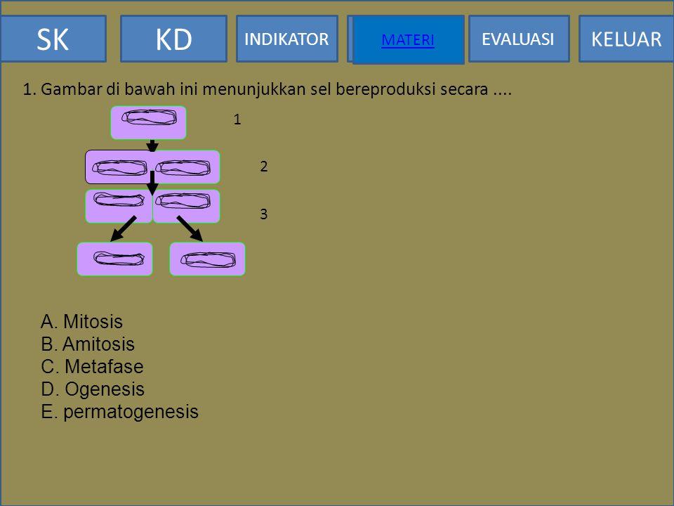 1. Gambar di bawah ini menunjukkan sel bereproduksi secara ....