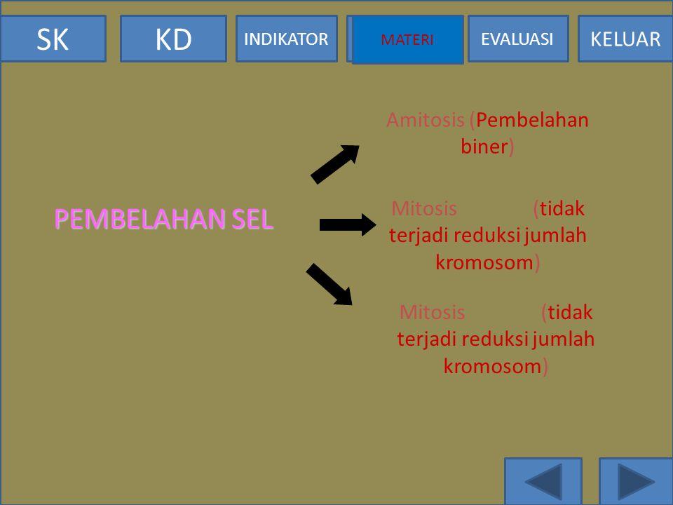 PEMBELAHAN SEL Amitosis (Pembelahan biner)