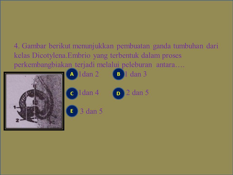 4. Gambar berikut menunjukkan pembuatan ganda tumbuhan dari kelas Dicotylena.Embrio yang terbentuk dalam proses perkembangbiakan terjadi melalui peleburan antara…. 1dan 2 1 dan 3 1dan 4 2 dan 5 3 dan 5