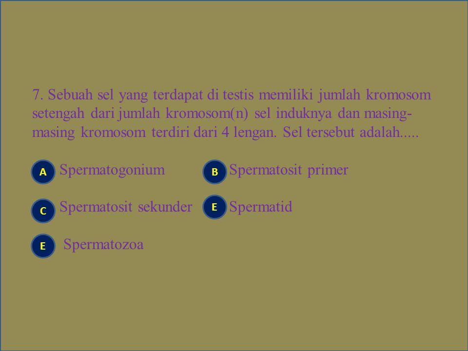 7. Sebuah sel yang terdapat di testis memiliki jumlah kromosom setengah dari jumlah kromosom(n) sel induknya dan masing- masing kromosom terdiri dari 4 lengan. Sel tersebut adalah..... Spermatogonium Spermatosit primer Spermatosit sekunder Spermatid Spermatozoa