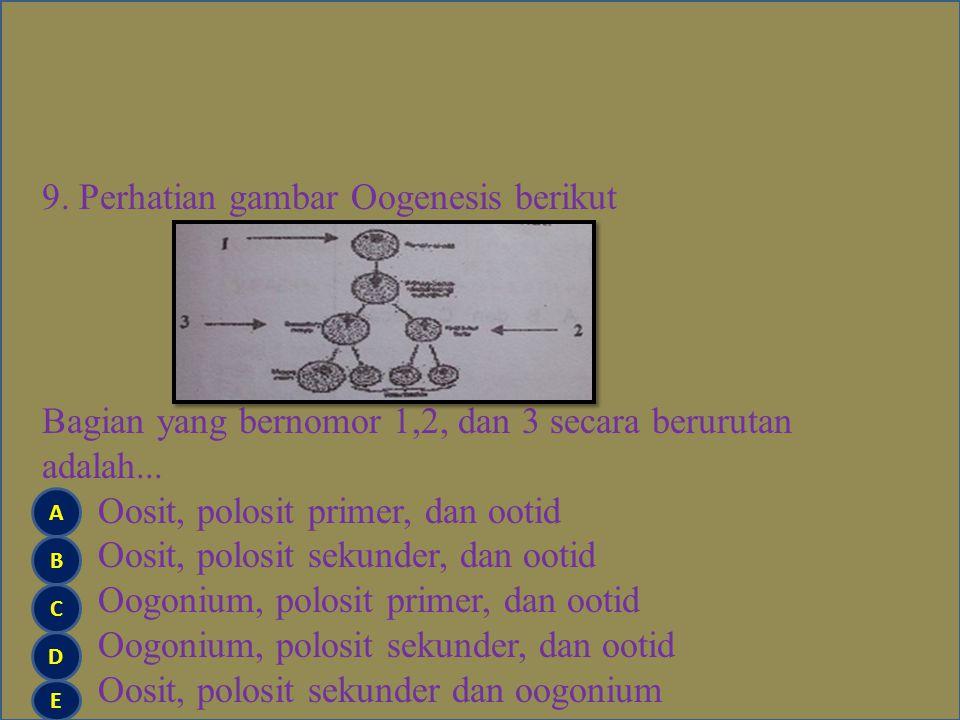 9. Perhatian gambar Oogenesis berikut Bagian yang bernomor 1,2, dan 3 secara berurutan adalah... Oosit, polosit primer, dan ootid Oosit, polosit sekunder, dan ootid Oogonium, polosit primer, dan ootid Oogonium, polosit sekunder, dan ootid Oosit, polosit sekunder dan oogonium