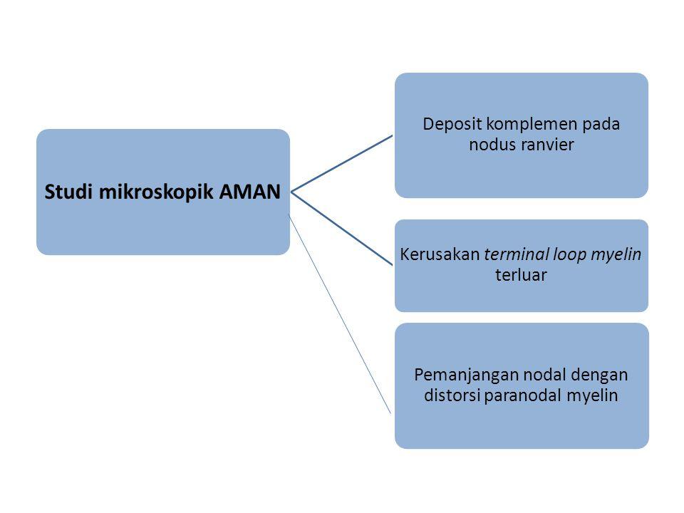 Studi mikroskopik AMAN