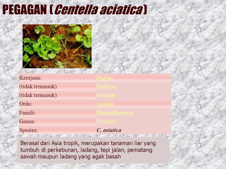 PEGAGAN (Centella aciatica )