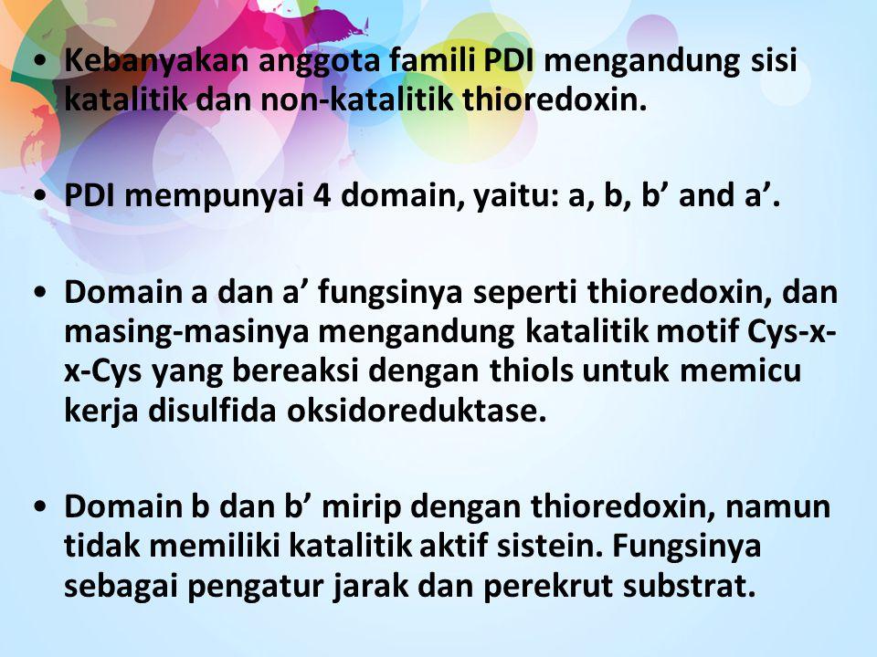 Kebanyakan anggota famili PDI mengandung sisi katalitik dan non-katalitik thioredoxin.