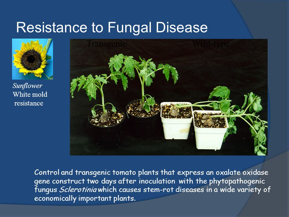 Resistance to Fungal Disease