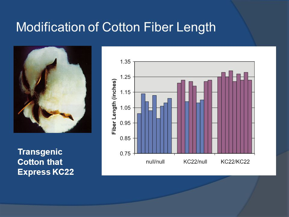 Modification of Cotton Fiber Length