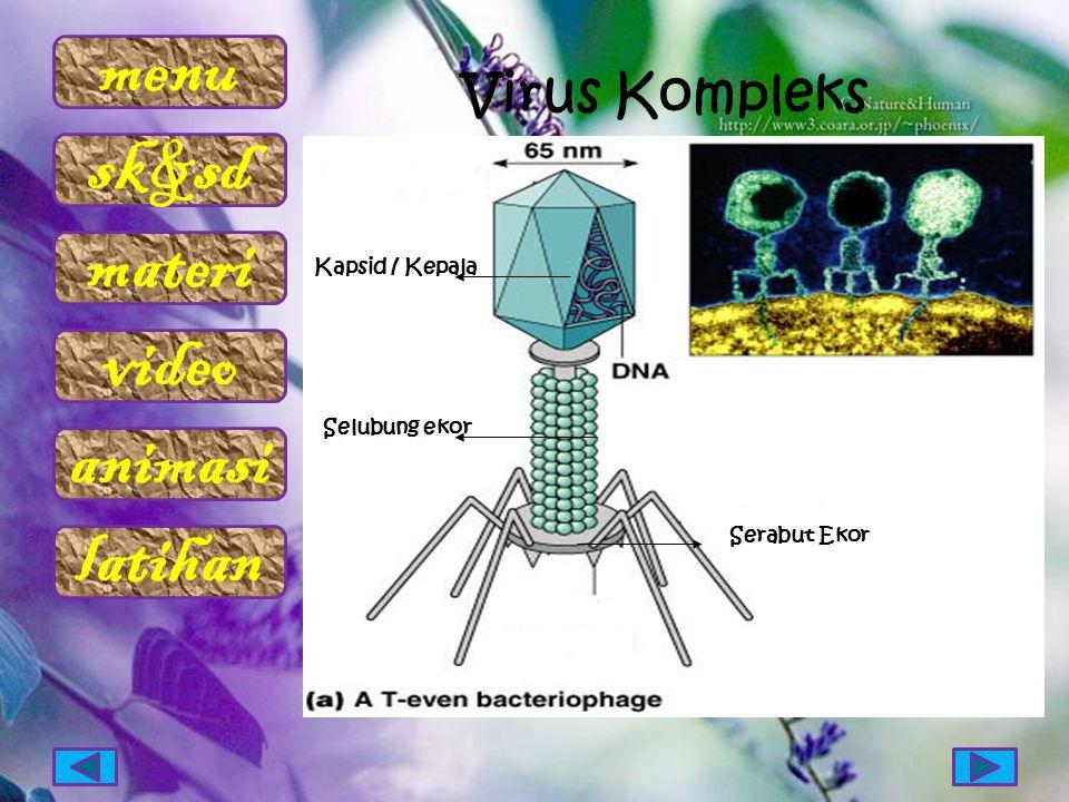 Virus Kompleks Kapsid / Kepala Selubung ekor Serabut Ekor