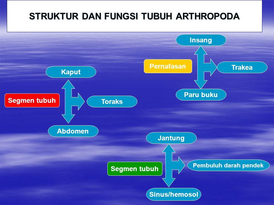 STRUKTUR DAN FUNGSI TUBUH ARTHROPODA
