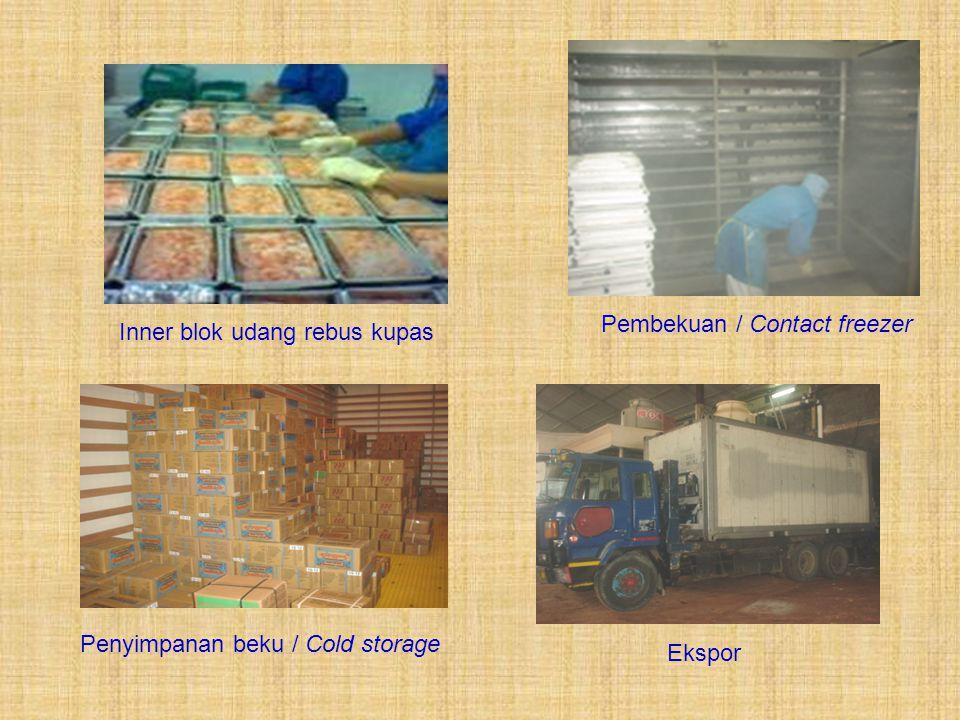 Pembekuan / Contact freezer Inner blok udang rebus kupas