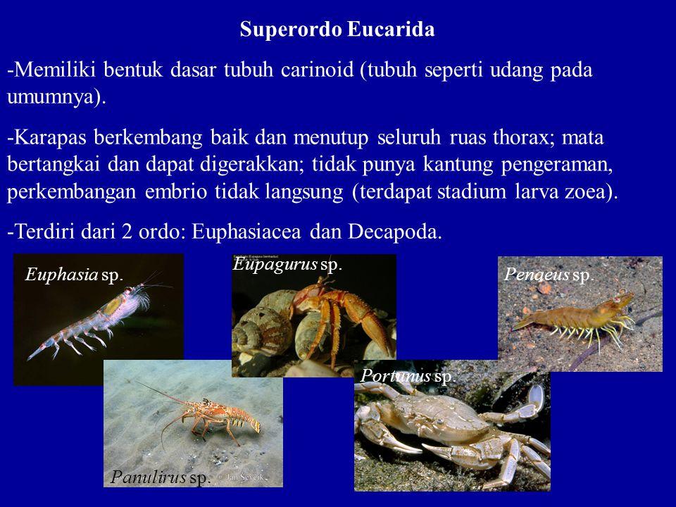 -Terdiri dari 2 ordo: Euphasiacea dan Decapoda.