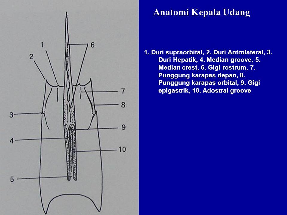 Anatomi Kepala Udang