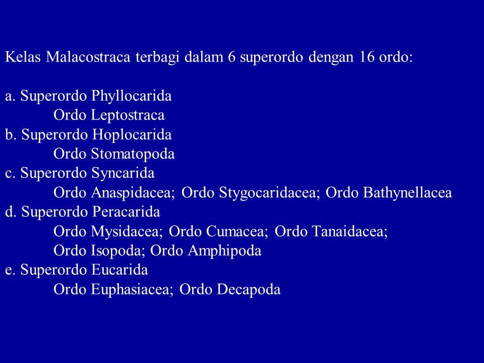 Kelas Malacostraca terbagi dalam 6 superordo dengan 16 ordo: a