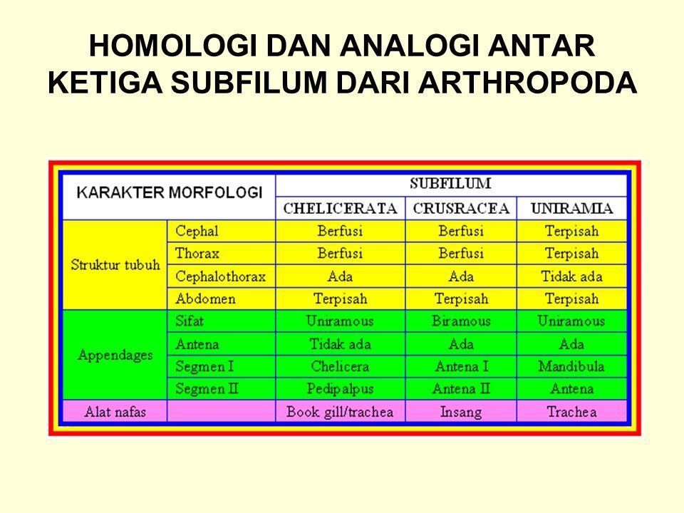 HOMOLOGI DAN ANALOGI ANTAR KETIGA SUBFILUM DARI ARTHROPODA