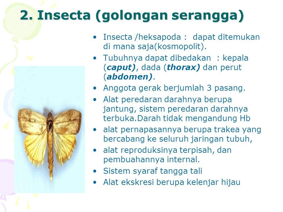 2. Insecta (golongan serangga)