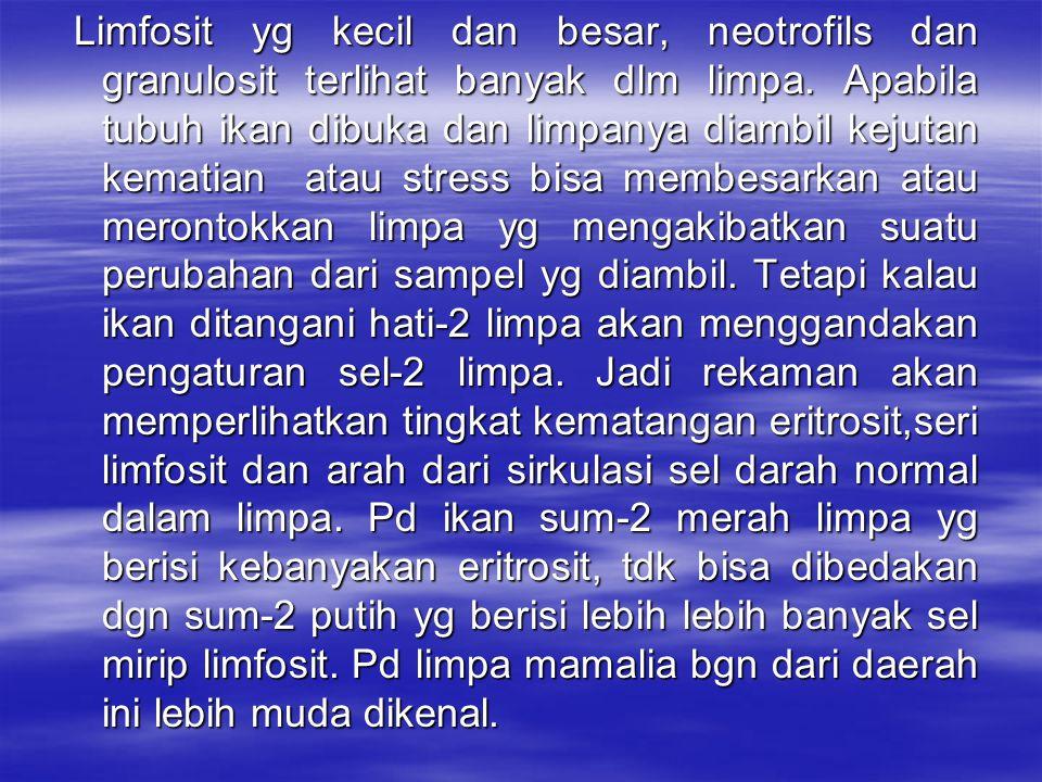 Limfosit yg kecil dan besar, neotrofils dan granulosit terlihat banyak dlm limpa.