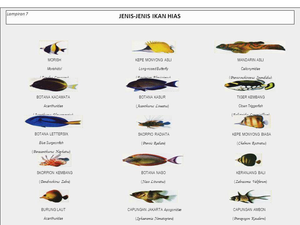 JENIS-JENIS IKAN HIAS Lampiran 7 MORISH (Zanclus Canescens)