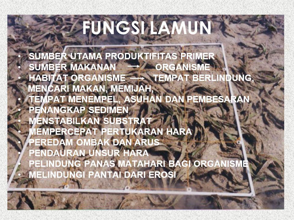 FUNGSI LAMUN SUMBER UTAMA PRODUKTIFITAS PRIMER