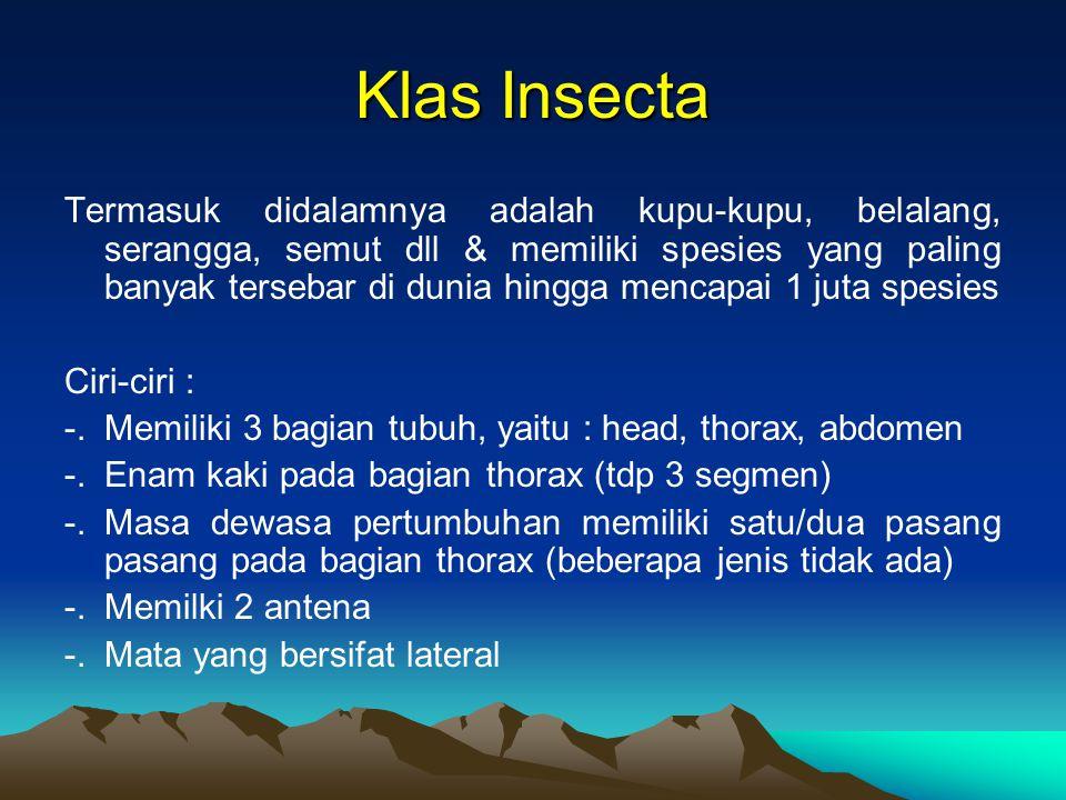 Klas Insecta