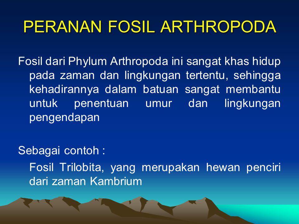 PERANAN FOSIL ARTHROPODA
