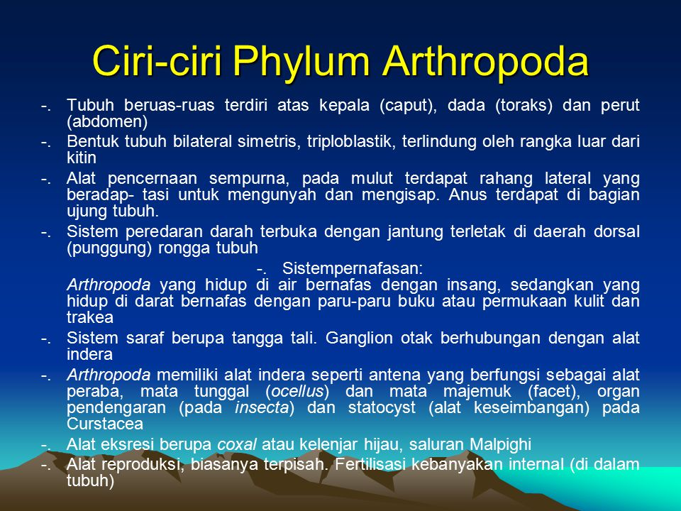 Ciri-ciri Phylum Arthropoda