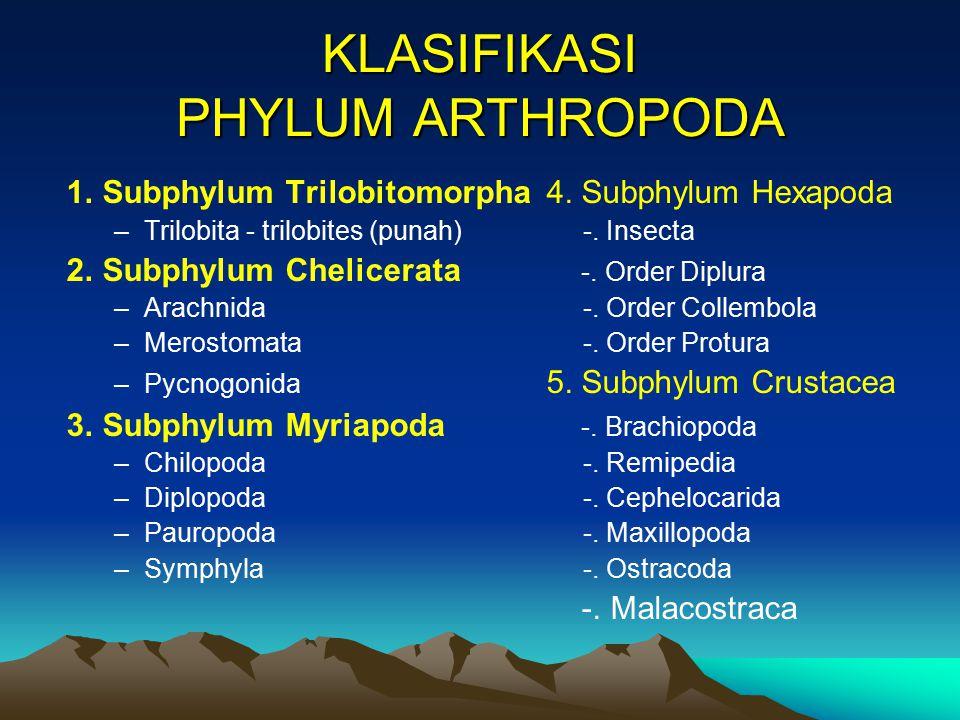 KLASIFIKASI PHYLUM ARTHROPODA
