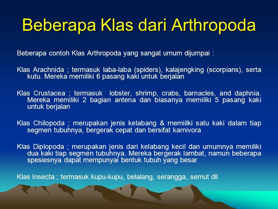 Beberapa Klas dari Arthropoda