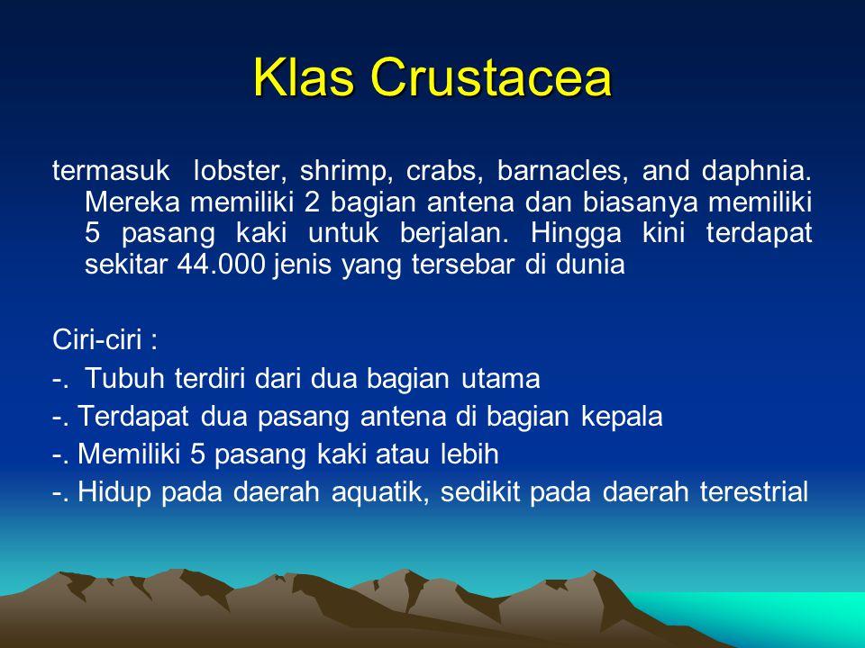 Klas Crustacea