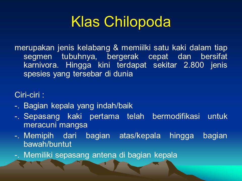 Klas Chilopoda