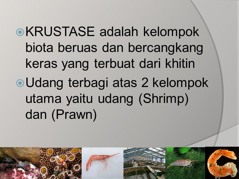 KRUSTASE adalah kelompok biota beruas dan bercangkang keras yang terbuat dari khitin