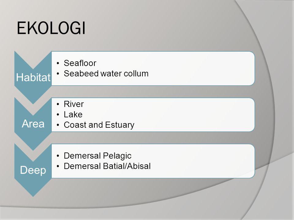 EKOLOGI Habitat Seafloor Seabeed water collum Area River Lake