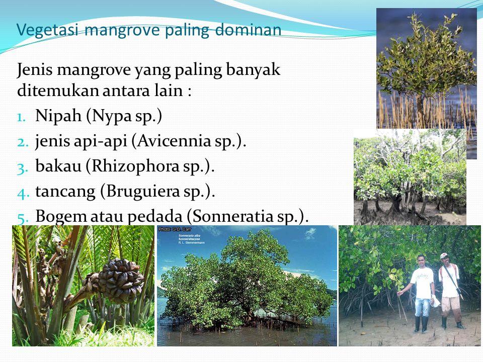 Vegetasi mangrove paling dominan
