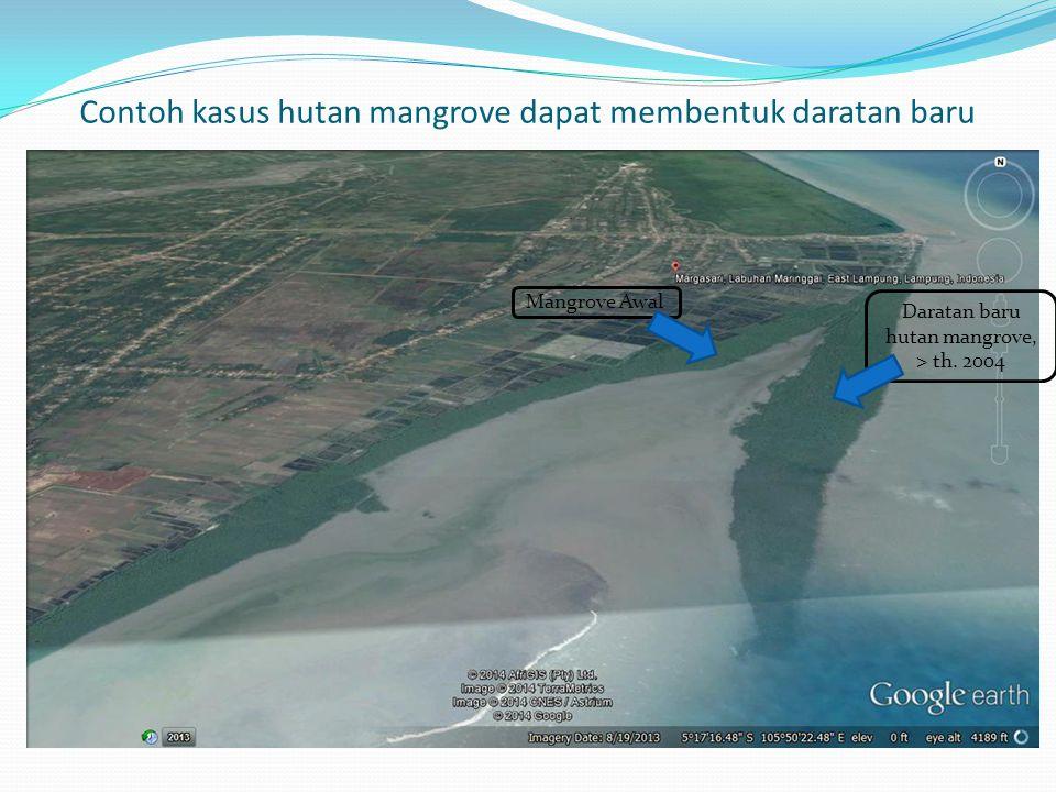 Contoh kasus hutan mangrove dapat membentuk daratan baru