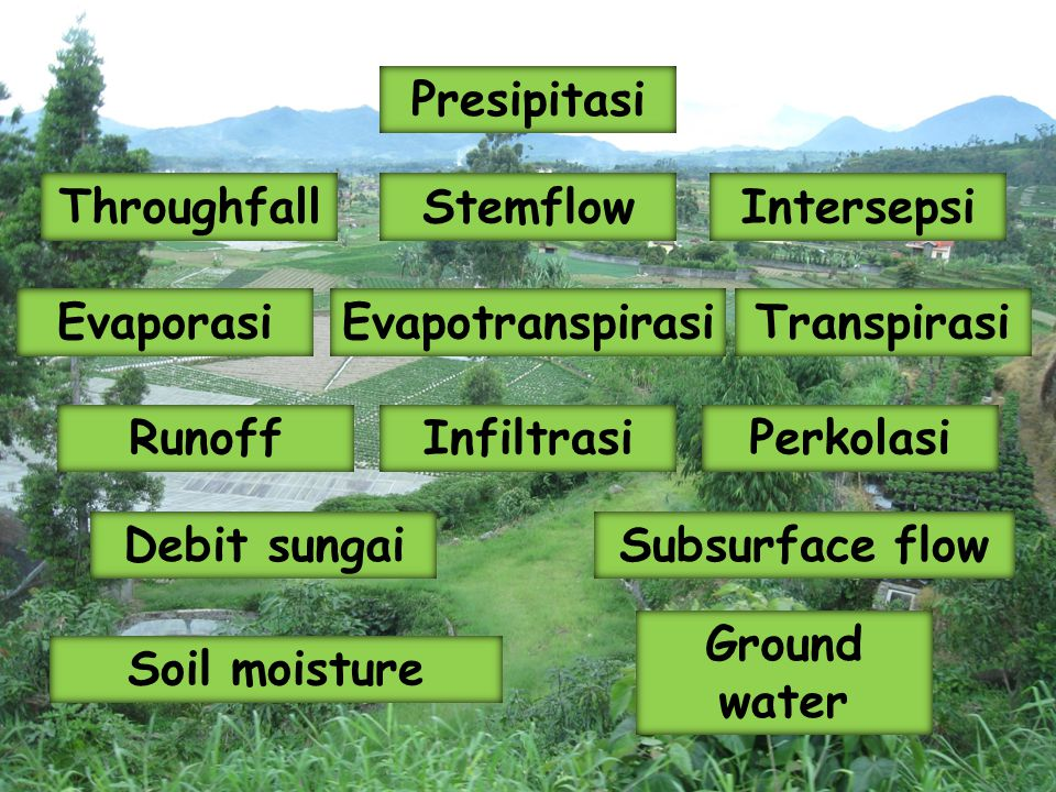 Presipitasi Throughfall. Stemflow. Intersepsi. Evaporasi. Evapotranspirasi. Transpirasi. Runoff.