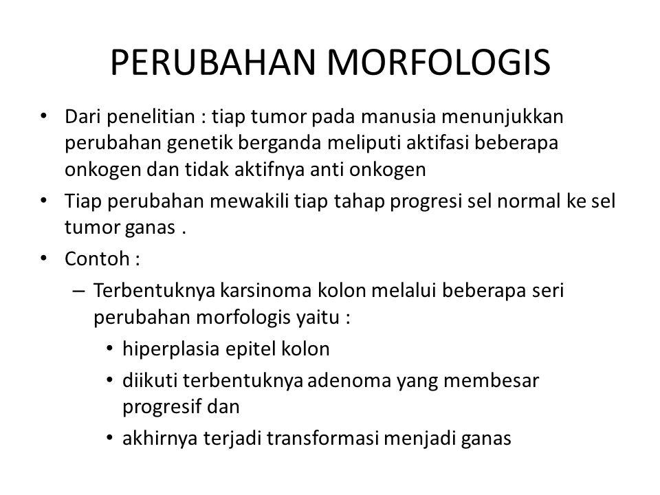PERUBAHAN MORFOLOGIS