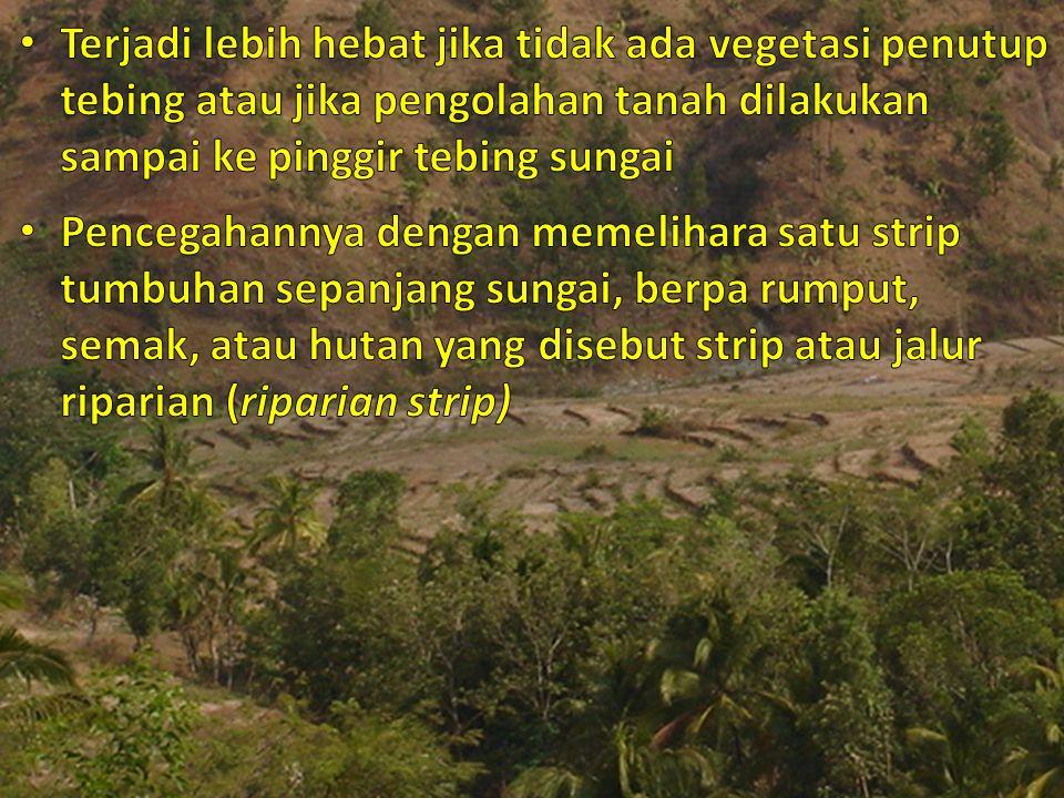 Terjadi lebih hebat jika tidak ada vegetasi penutup tebing atau jika pengolahan tanah dilakukan sampai ke pinggir tebing sungai