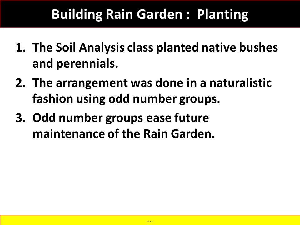 Building Rain Garden : Planting