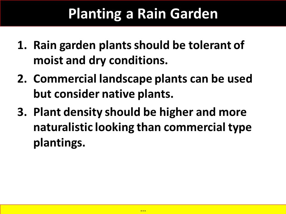 Planting a Rain Garden Rain garden plants should be tolerant of moist and dry conditions.