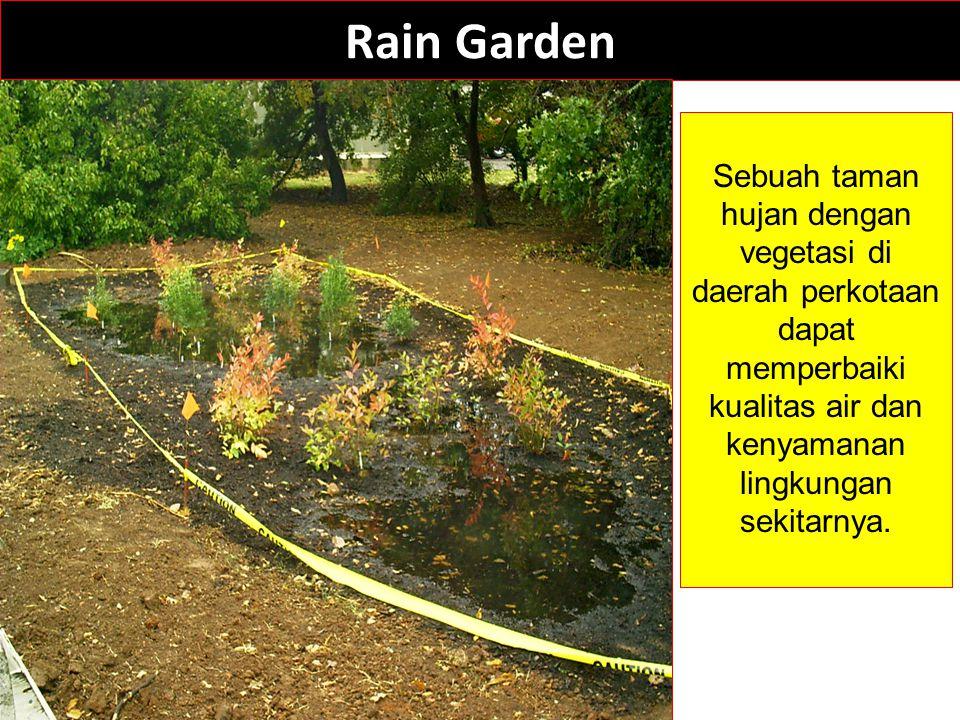 Rain Garden Sebuah taman hujan dengan vegetasi di daerah perkotaan dapat memperbaiki kualitas air dan kenyamanan lingkungan sekitarnya.