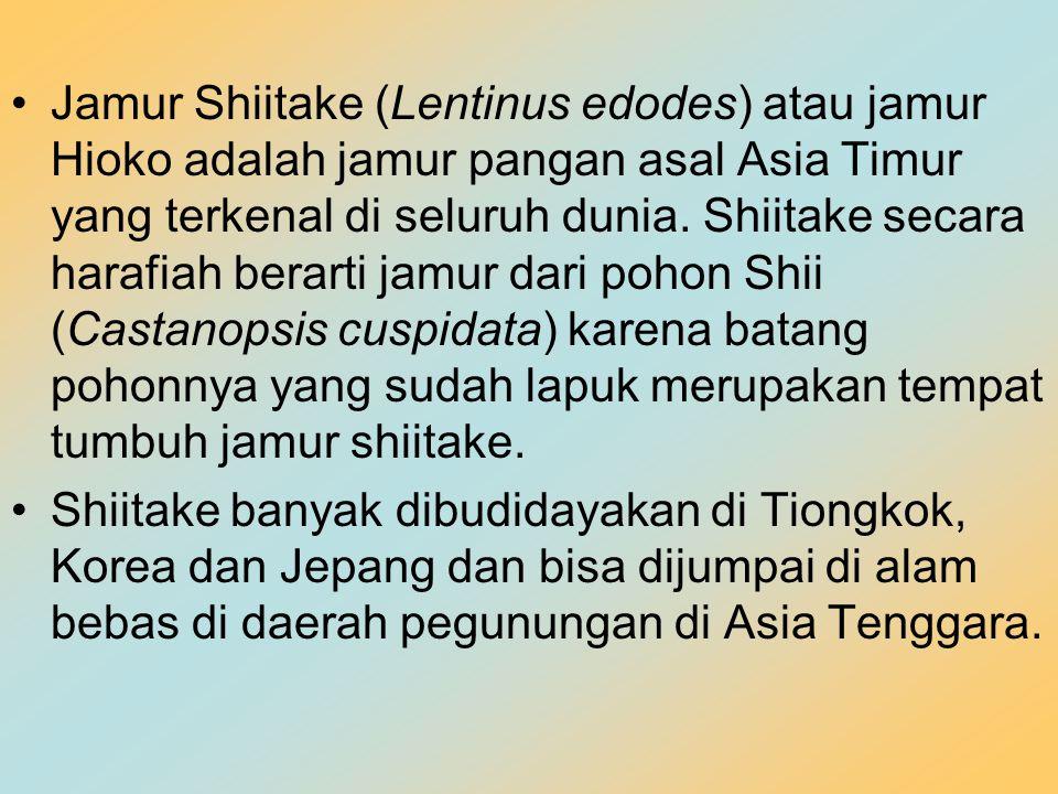 Jamur Shiitake (Lentinus edodes) atau jamur Hioko adalah jamur pangan asal Asia Timur yang terkenal di seluruh dunia. Shiitake secara harafiah berarti jamur dari pohon Shii (Castanopsis cuspidata) karena batang pohonnya yang sudah lapuk merupakan tempat tumbuh jamur shiitake.