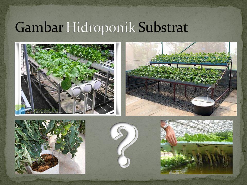 Gambar Hidroponik Substrat