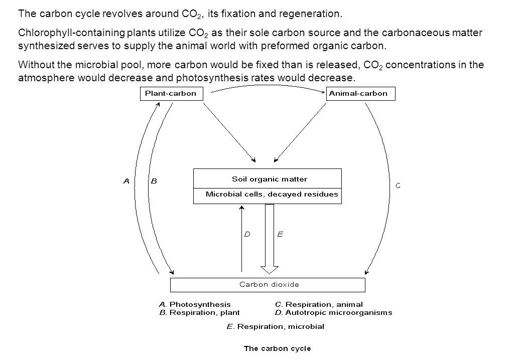 The carbon cycle revolves around CO2, its fixation and regeneration.