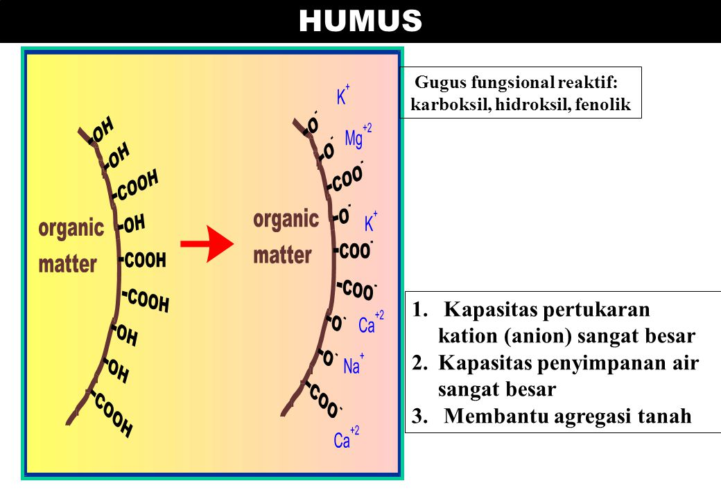 Gugus fungsional reaktif: karboksil, hidroksil, fenolik